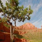 """Sedona Tree"" by Erica_Marshall"