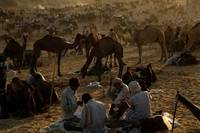 Pushkar-Camel-Fair-2