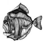 """exotic fish"" by Marina_Fetting"