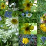 """Buttercups, daisies and others"" by LOUISEDIONNE"