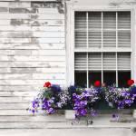 """Flower Box"" by triemichaud"