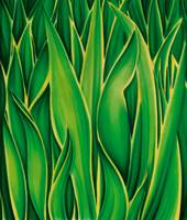 Flow of Green Leaves