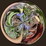 """Forest Floor"" by DSainton"
