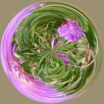 """Ice Plant"" by DSainton"