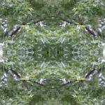 """Kaleidoscope of Leaves 1"" by frannie"