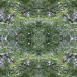 """Kaleidoscope of Leaves 2"" by frannie"