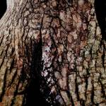 """trunk"" by AMWart"