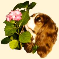 Cavalier and Flower
