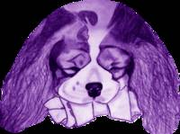 Cavalier King Charles Spaniel With Bone Purple