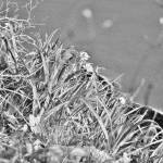 """""""Tall Grass"""" by Fawnspictures"""