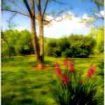 """""""Shadows on the Lawn"""" by doncon402"""
