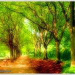 """""""Monticello Walk"""" by doncon402"""
