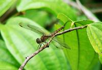 Singapore zoo dragon fly 1