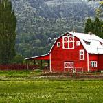 """Red Barn 1"" by Sari_McNamee"