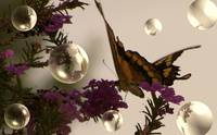 Butterfly n bubbles