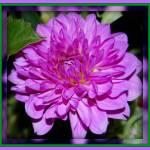 """Purple Glam"" by psovart"