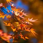 """Autumn leaves"" by ImageArt-Photography"