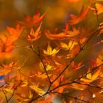 """Autumn in Japan"" by ImageArt-Photography"