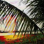 """Palm sunset"" by elayne"