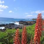 """Hawaii_1"" by jsrassociates"