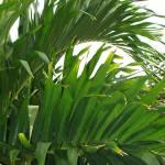 """Palm Tree"" by jsrassociates"