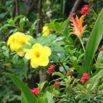 """Florida_Flowers"" by jsrassociates"