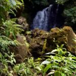 """Rainforest Waterfall"" by Eileen"