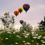 """Balloons and Daisies"" by chrisromano"