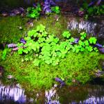 """Clover and Moss"" by chrisromano"