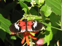 Butterfly World4
