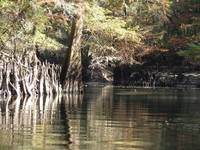 Chipola River Fall 039