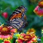 """Butterfly Garden"" by DonSullivan"