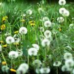 """Overgrown Garden"" by tomgnt"