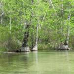 """Turkey Creek Paddle in Niceville Florida"" by Waltonoutdoors"