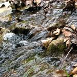 """""""Leaves in a stream"""" by robphillips"""