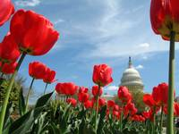 US Capitol Building Spring photo