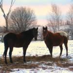 """Farm Life"" by BlueRosesArt"