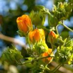 """Orange Flowers"" by duilio"