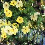 """""""Yellow Roses and Fence"""" by artistfaye"""