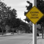 """Turtle Crossing"" by ScottE"