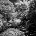 """zilker-botanical-bridge-001"" by treyerice"