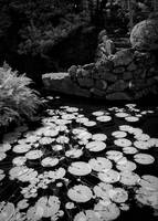 zilker-botanical-lilly-pad-001