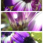 """Purple triple"" by LOUISEDIONNE"
