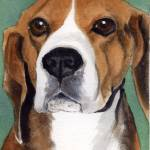 """beagle"" by pedigreeartist"