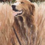 """""""beau in field"""" by pedigreeartist"""
