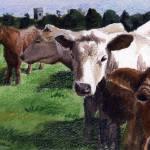 """Irish Cows"" by pedigreeartist"