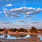 """Elephant Watering Hole"" by ccsg51"