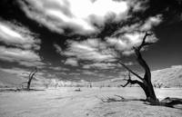 Dead Vlei Black and White