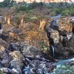 """Baobabs near falls"" by ccsg51"