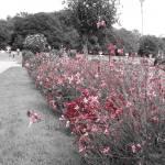 """""""Les Fleurs de Chenonceau"""" by alexash"""
